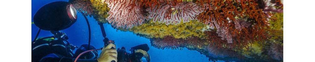 Luci e torce a led per fotografia e videoripresa subacquea